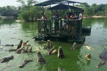 Terrifying Tourist Attraction With Crocodiles Shut Down in Thailand