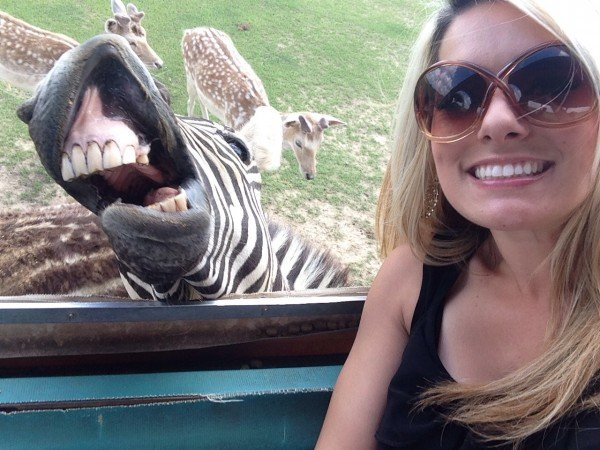 selfie-zebra
