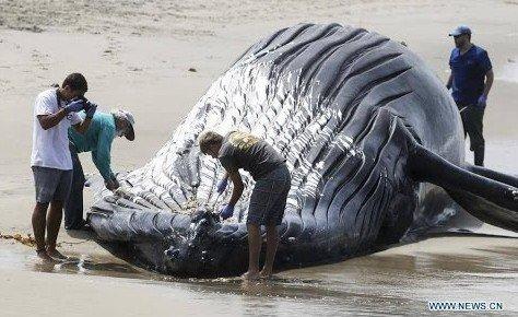 whale la