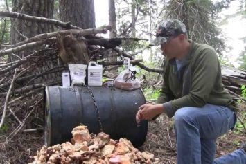 Best Bear Baiting Strategies