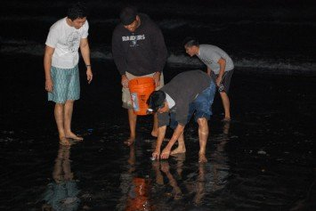 When to See Grunion Run in California