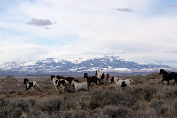 How Wild Horses Became the First Invasive Species