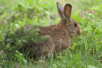 4 Tips for Successful Rabbit Hunting
