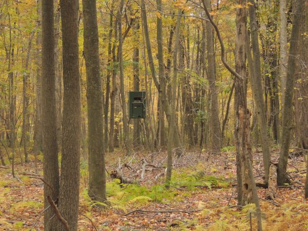 9 Ways To Trick Out Your Hunting Treestand Liveoutdoors