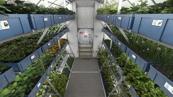 How To Grow Food On Mars Liveoutdoors