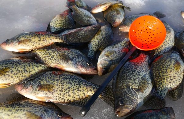 3 tackle tips for catching crappie through the ice for Best crappie fishing times