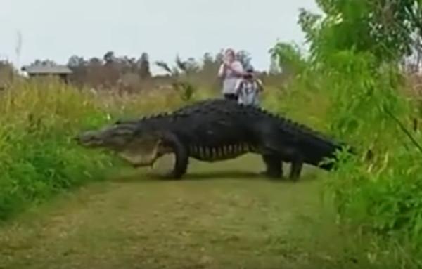 giant gator1