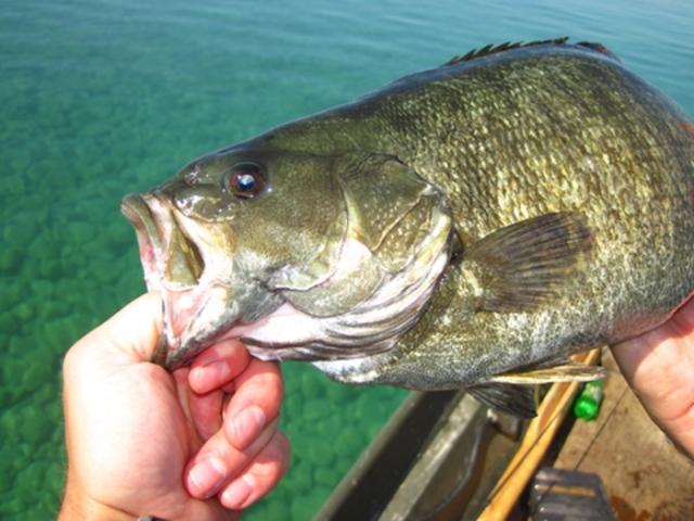 Fishing Files